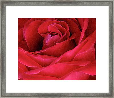 Perfect Petals Framed Print by Deborah Johnson