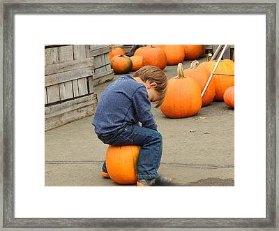 Perfect Pick Framed Print by Debbie Hall