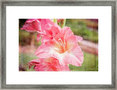 Perfect Pink Canna Lily Framed Print