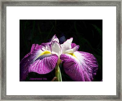 Perfect Pose Framed Print by Sandy Collier