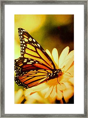 Perfect Pose Framed Print by Shasta Eone