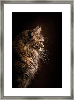 Perfect Profile Framed Print