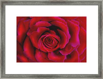 Perfect Rose Framed Print by Joel Payne