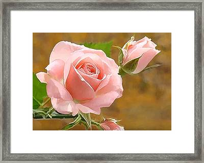 Perfect Rose  Framed Print by Lanjee Chee