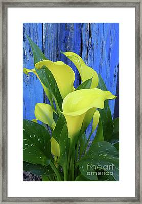 Perfect Yellow Framed Print by To-Tam Gerwe