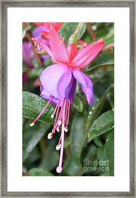 Perfection In Nature Framed Print