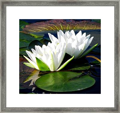 Perfection Together Framed Print by Angela Davies