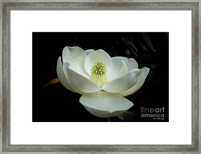 Perfectly Magnificent Magnolia Flower Art Framed Print