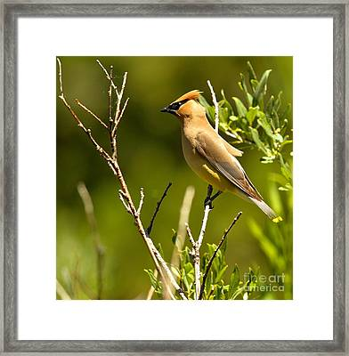 Perfectly Perched Framed Print by Adam Jewell