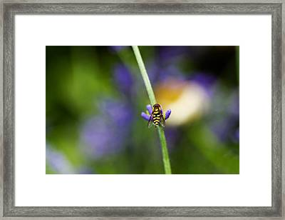 Perfectly Positioned Framed Print by Rebecca Cozart