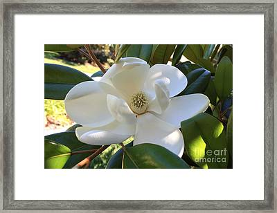 Perfectly Sweet Magnolia Framed Print
