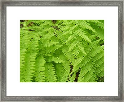 Perfume Of The Woods Framed Print by Jennifer Compton