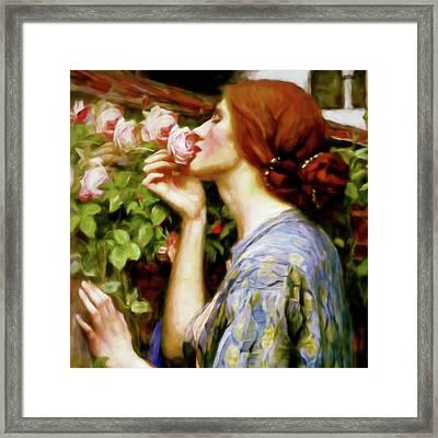 Perfumed Soul Of A Rose Portrait Closeup Framed Print