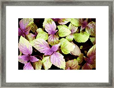 Perilla Beauty Framed Print