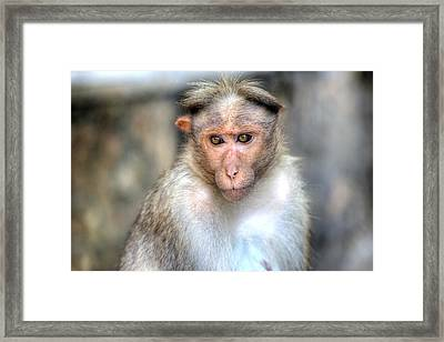 Periyar National Park - India Framed Print by Joana Kruse