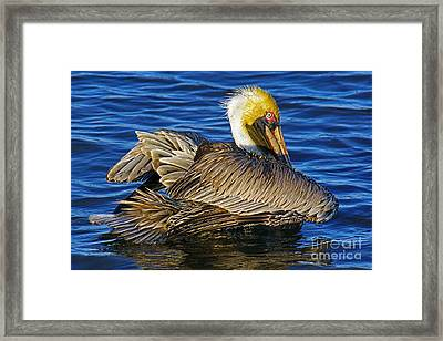 Perky Pelican Framed Print by Larry Nieland