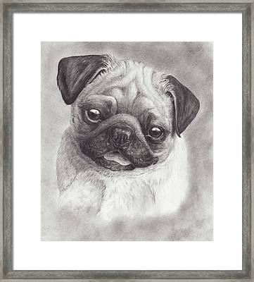 Perky Pug Framed Print