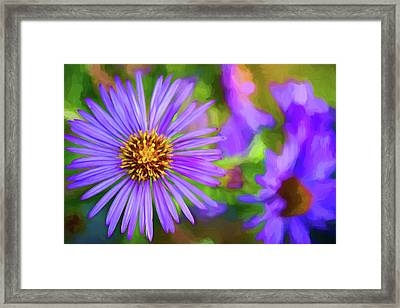 Perky Purple Aster - Paint Framed Print by Steve Harrington