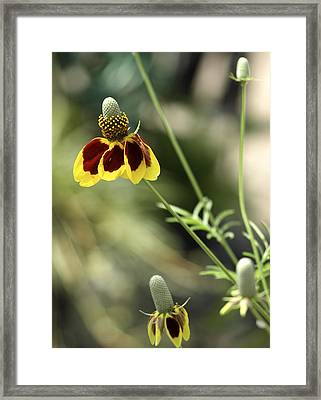 Perky Yellow Framed Print by Barbara Middleton