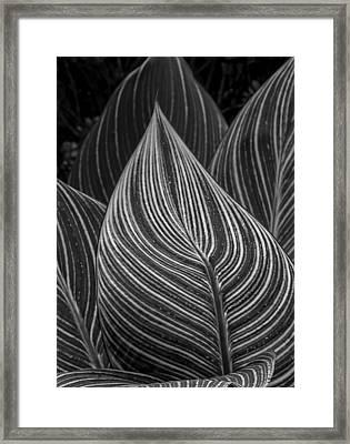 Perpetual Motion Framed Print by Robert Ullmann