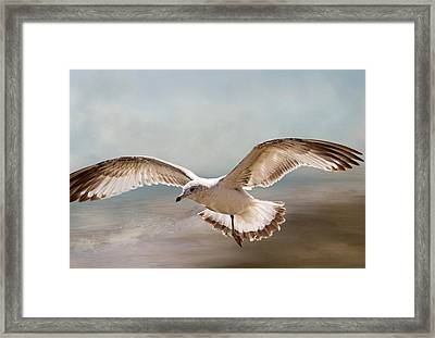 Perseverance Framed Print by Donna Kennedy