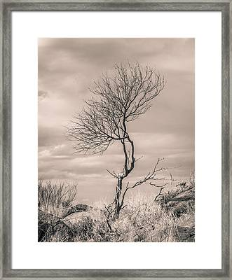Perseverance Framed Print by Racheal Christian