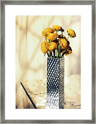 Persian Buttercup Framed Print by Tony Cordoza