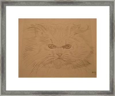 Persian Cat 4 Framed Print by Bo Klinge
