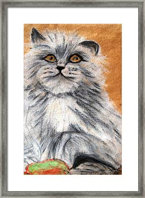 Persian Cat Framed Print by Angela Murray