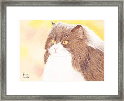 Persian Kitty Framed Print
