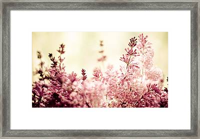 Persian Lilacs In The Sun Framed Print