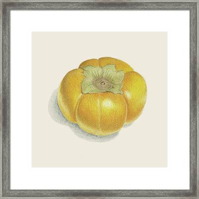 Persimmon Framed Print by Carlee Lingerfelt