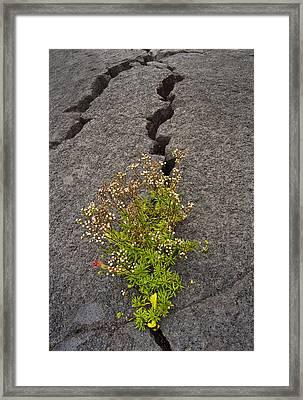 Persistent Flora Framed Print