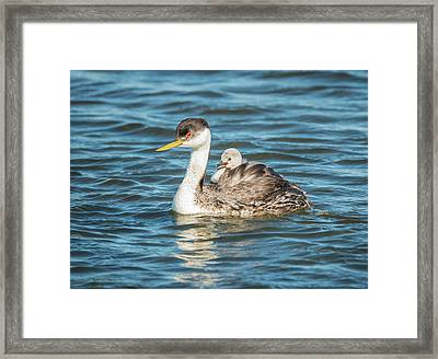 Personal Watercraft Framed Print