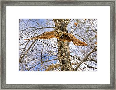 Perturbed Framed Print by Donna Kennedy