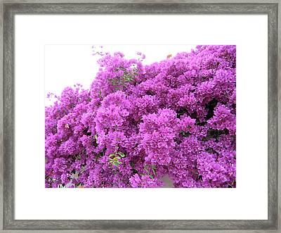 Framed Print featuring the photograph Peruvian Blooms by Rebecca Wood