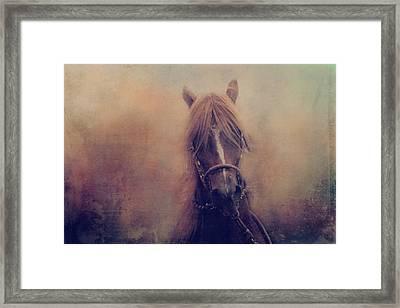 Peruvian Horse Framed Print