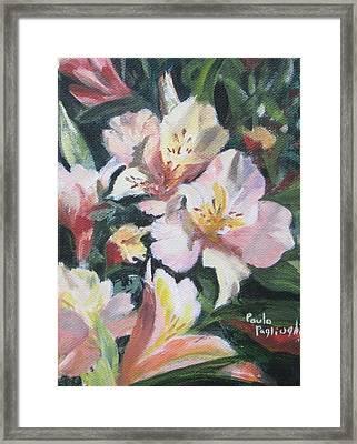 Peruvian Lily Framed Print