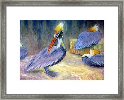 Peruvian Pelicans One  Pastel Framed Print