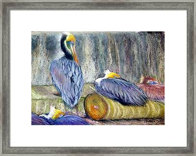 Framed Print featuring the pastel Peruvian Pelicans Three Pastel by Antonia Citrino