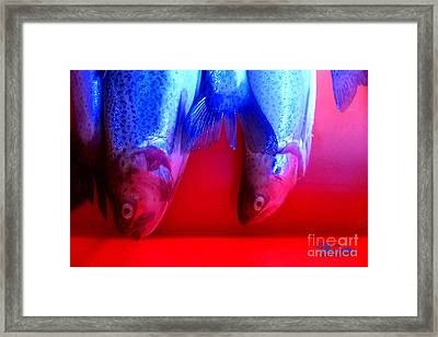 Pesce 1 Framed Print