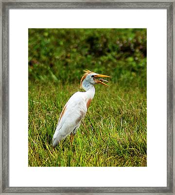 Pest Control Framed Print by Norman Johnson