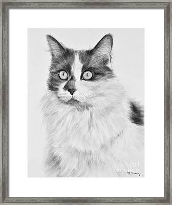 Pet Cat Drawing Olivia Framed Print