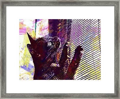 Framed Print featuring the digital art Pet Cat Look Kitten  by PixBreak Art