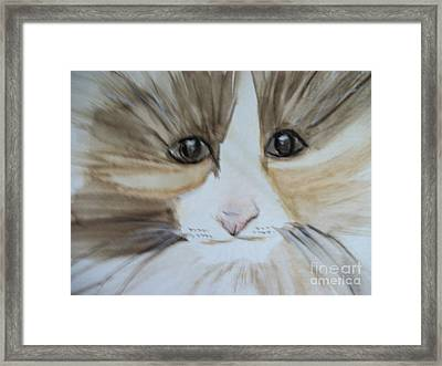 Pet Me Please Framed Print by Roxanna Finch
