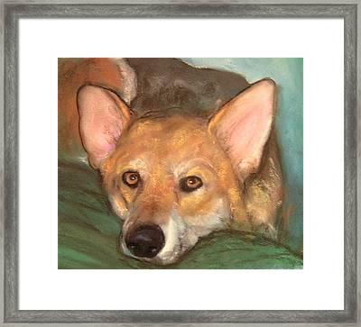 Pet Portrait Framed Print by Darla Joy  Johnson