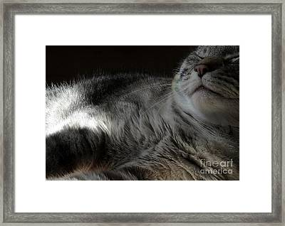 Pet Portrait - Lily Three Framed Print