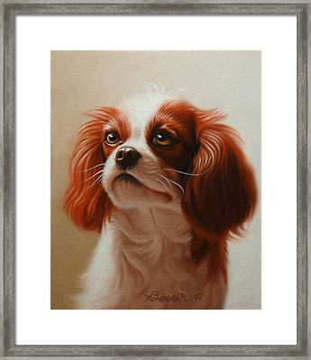 Pet Portrait Of A Cavalier King Charles Spaniel Framed Print by Eric Bossik
