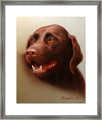 Pet Portrait Of A Chocolate Labrador Framed Print by Eric Bossik