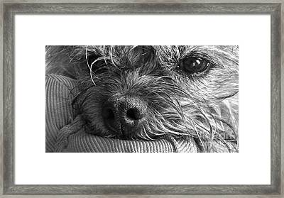 Framed Print featuring the photograph Pet Portrait - Puck II by Laura Wong-Rose